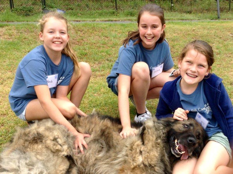 3 Kooks & a dog