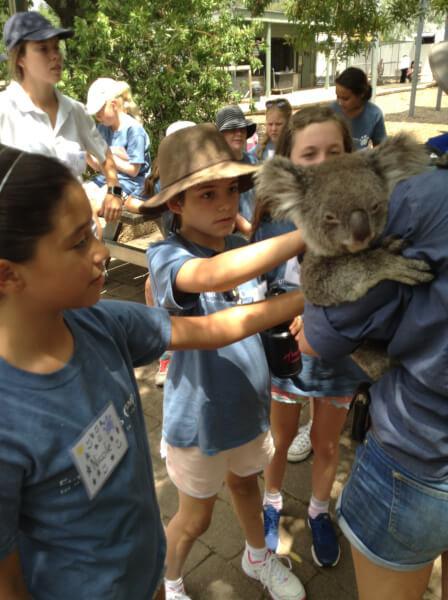 koala love 5