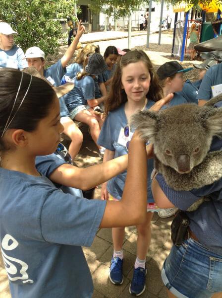 koala love 6