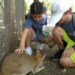 Wombats pet a Wallaby