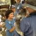 koala love 3